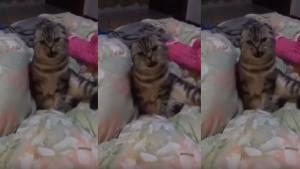 """Υπάρχει γάτα που λέει """"μαμά""""!"""