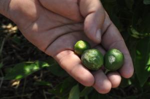 Φθιώτιδα: Ανυπολόγιστες καταστροφές από την χαλαζόπτωση – Σε απόγνωση οι αγρότες!