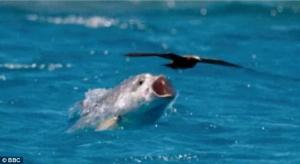Τεράστιο ψάρι πετάγεται από το νερό και κάνει μια μπουκιά πουλί στον ουρανό [pics]