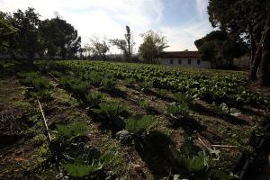 Ανακοινώθηκε από τον ΟΠΕΚΕΠΕ η προθεσμία για τις βιολογικές καλλιέργειες