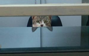 Σπάρτη: Γάτα ο γραμματέας στα επείγοντα του νοσοκομείου – Οι απίθανες εικόνες που σαρώνουν το διαδίκτυο [pics]