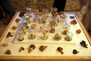 Καλαμπάκα: Πανάκριβο μανιτάρι – τρούφα 510 γραμμαρίων ανακάλυψε σκύλος στα ελληνικά βουνά!