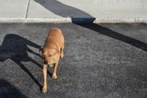 Λέσβος: Ο σκύλος του σχολείου που επέζησε από το σεισμό επέστρεψε κοντά στους μαθητές! [pic]