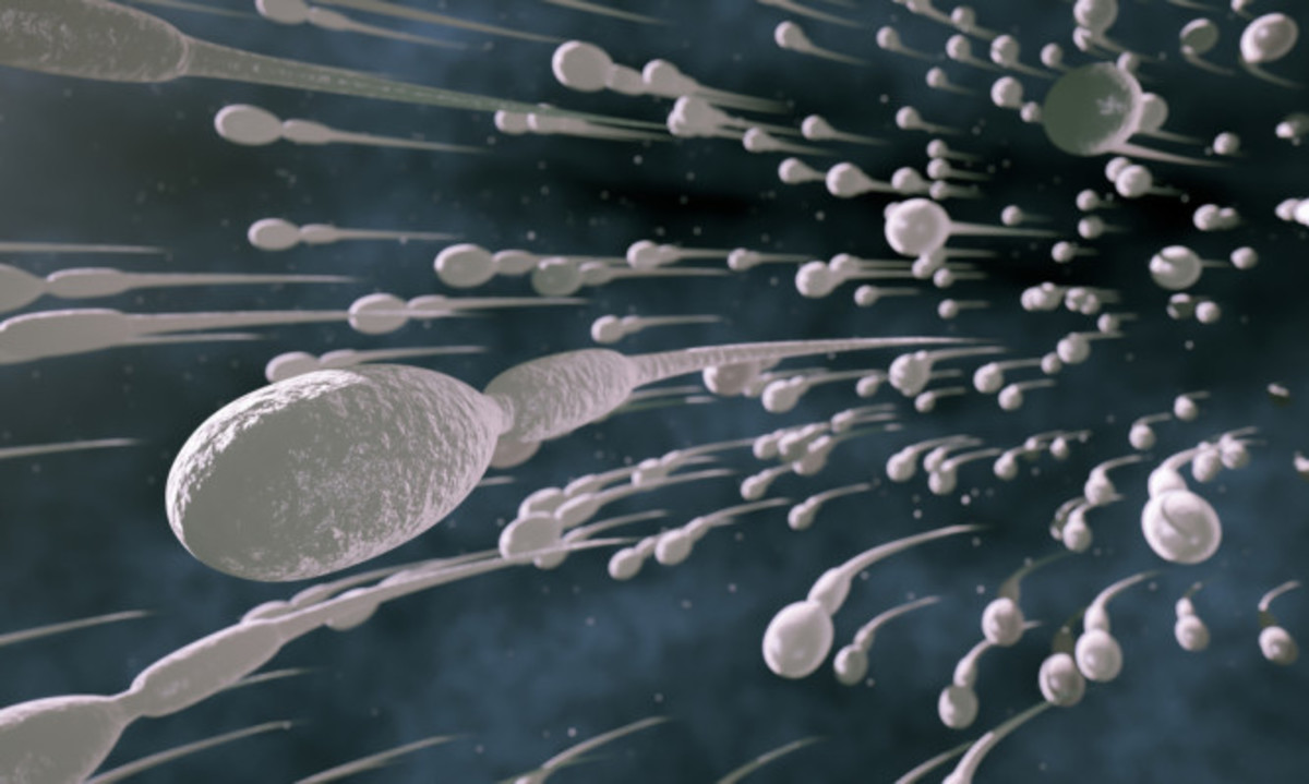 Γιατί οι ερευνητές συνιστούν στους άντρες να εκσπερματώνουν 21 φορές τον μήνα…