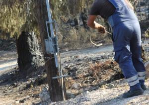 Απίστευτο! Βοσκός στα Τρίκαλα έκοψε στύλους της ΔΕΗ για να φτιάξει μαντρί!