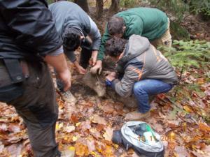 Γρεβενά: Επιχείρηση για τη διάσωση αρκούδας που πιάστηκε σε παγίδα για αγριογούρουνα [pics]