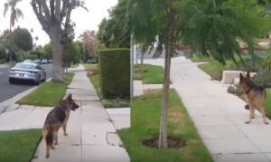 Σκύλος φρικάρει μόλις συνειδητοποιήσει ότι το αφεντικό του δεν βρίσκεται πια από πίσω του!