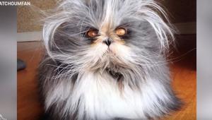 Η πιο χνουδωτή γάτα του κόσμου έχει το «σύνδρομο του λυκανθρώπου»