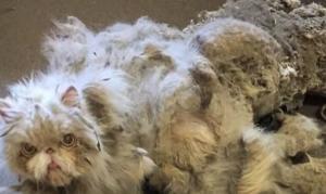 Αυτός ο γάτος βρέθηκε με 2 κιλά λάσπης πάνω του