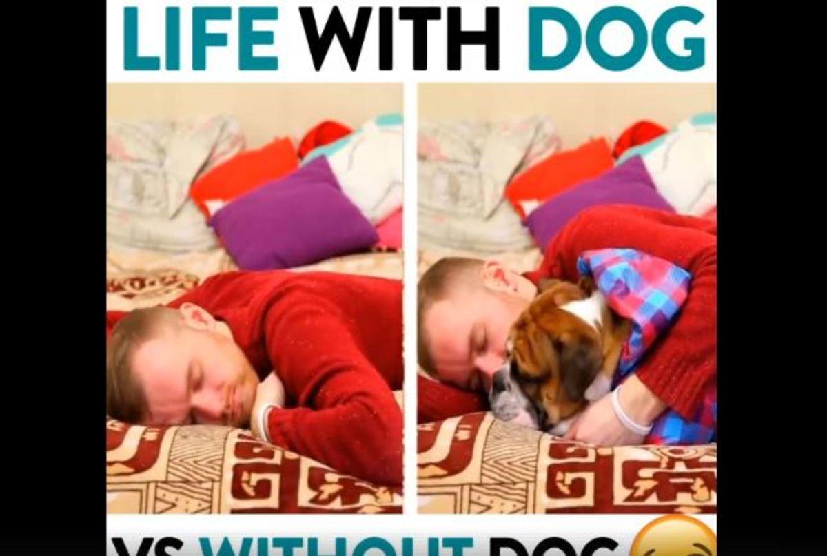 Η ζωή με σκύλο και η ζωή χωρίς αυτόν…