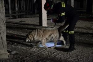 Μαγνησία: Βρέθηκε νεκρός ο κυνηγός που είχε εξαφανιστεί