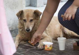 Κοζάνη: 1.000 ευρώ αποζημίωση από το Δήμο για δάγκωμα αδέσποτου σκύλου