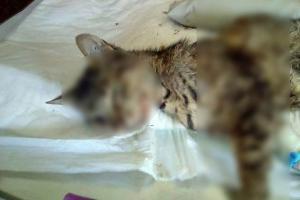 Εγκληματίες! Χτυπούν γατάκια με αεροβόλο στην Αγία Παρασκευή
