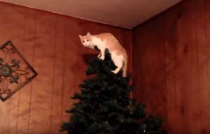 Ποια Χριστούγεννα όταν υπάρχουν γάτες στο σπίτι!