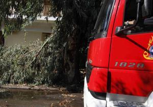 Τρίκαλα: Έκλεισε η εθνική οδός λόγω πτώσης δέντρου