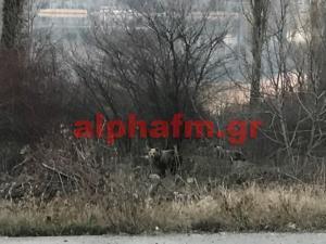 Καστοριά: Έπεσε το βλέμμα τους στο δάσος και είδαν αυτές τις εικόνες που θα θυμούνται για πάντα [pics]
