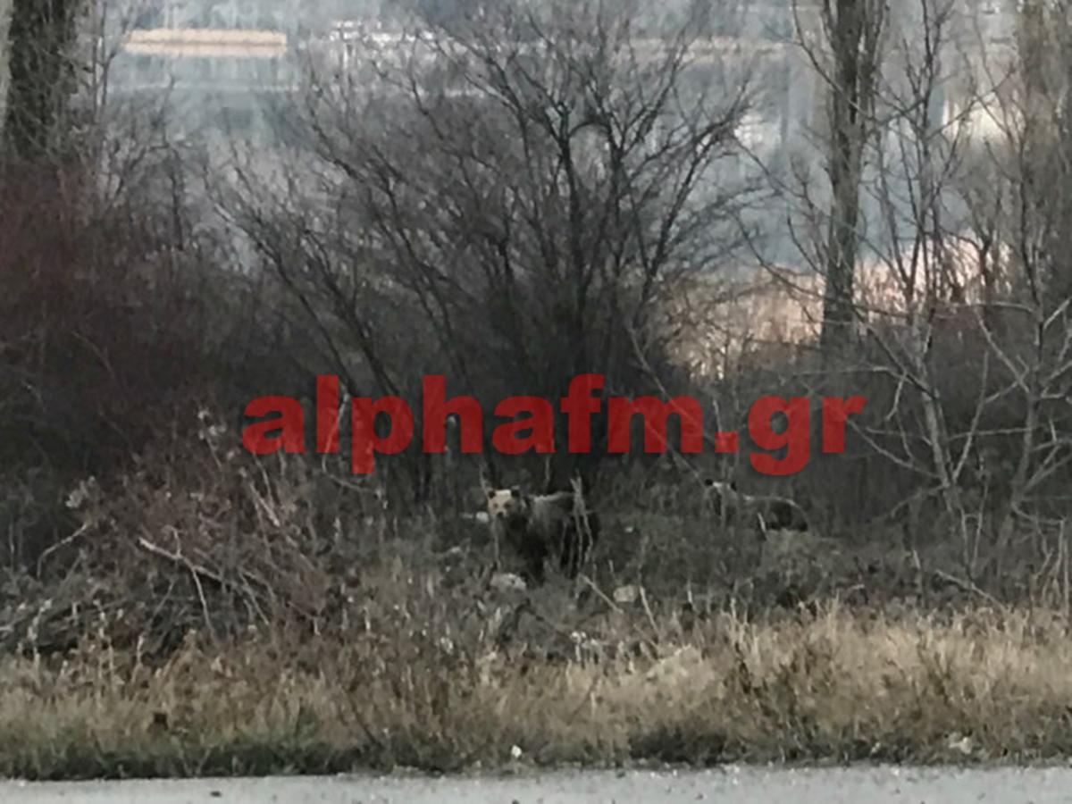 Καστοριά: Έπεσε το βλέμμα τους στο δάσος και είδαν αυτές τις εικόνες που θα θυμούνται για πάντα [pics] | Newsit.gr