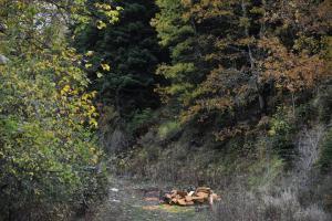 Ρόδος: Βγήκε να κόψει ξύλα και βρέθηκε νεκρός!