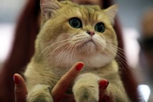 Γάτος είχε χαθεί για εννέα χρόνια και επέστρεψε!