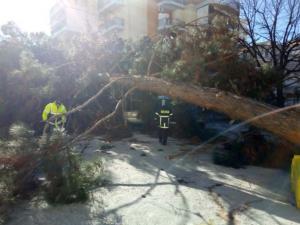 Λάρισα: Πτώση δέντρου στο πάρκινγκ του νοσοκομείου – Οι εικόνες που εκτυλίχθηκαν στο σημείο [vid]