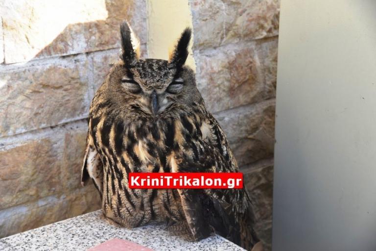 έκπληκτος από μεγάλο πουλί