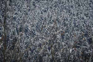 Καιρός: Παγετός την Παρασκευή! Πού θα έχει 0 βαθμούς Κελσίου!