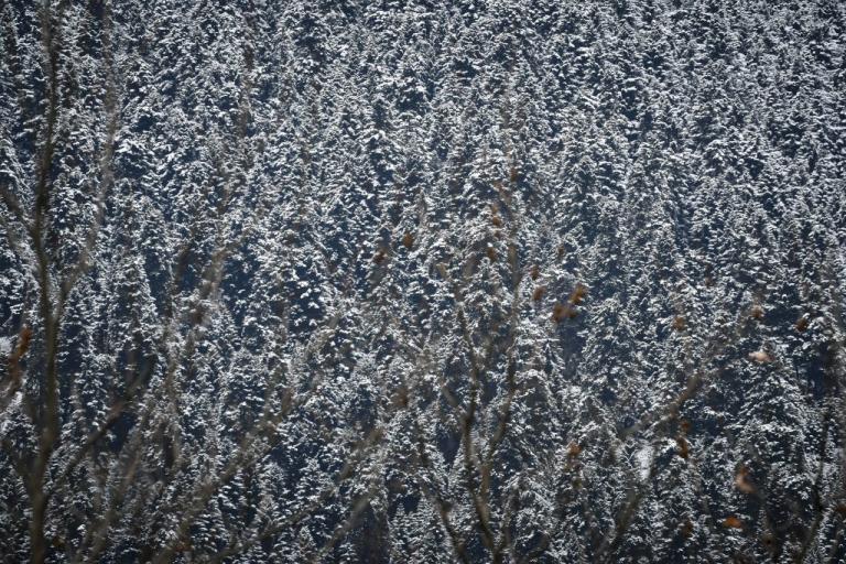 Καιρός: Παγετός την Παρασκευή! Πού θα έχει 0 βαθμούς Κελσίου! | Newsit.gr
