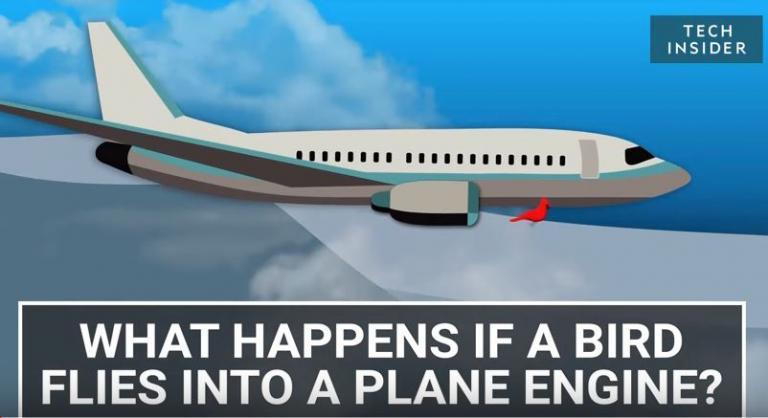 Τι πραγματικά συμβαίνει όταν ένα πουλί συγκρουστεί με κινητήρα αεροπλάνου | Newsit.gr