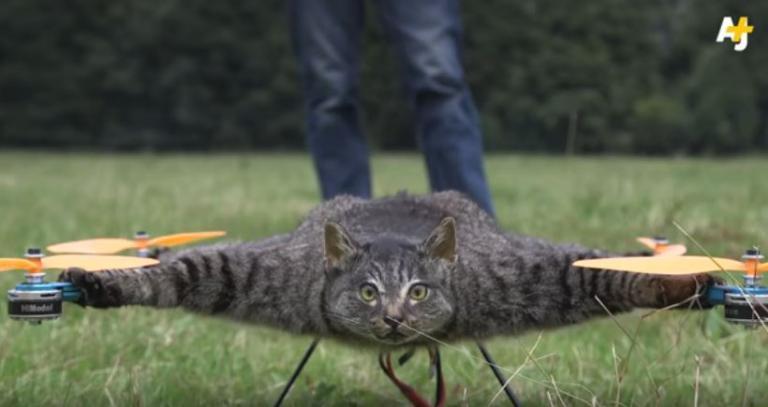 Μετέτρεψε τη νεκρή γάτα του σε drone | Newsit.gr