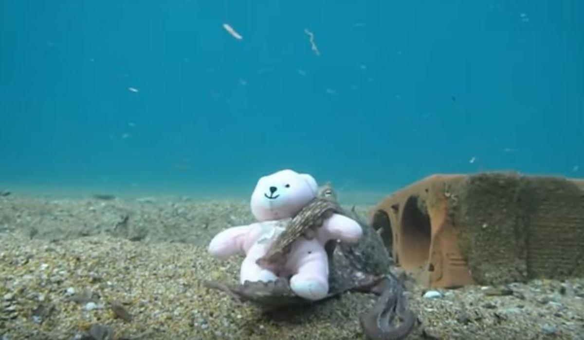 Όταν ένα χταπόδι ερωτεύτηκε ένα αρκουδάκι   Newsit.gr