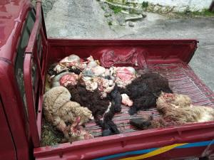 Με προβιές σφαγμένων προβάτων «υποδέχτηκαν» τον Μουζάλα οι κάτοικοι στη Μόρια [vid]