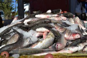 """Διαψεύδει η ΑΑΔΕ για το πρόστιμο σε ψαρά στην Σκόπελο – """"Δεν στείλαμε κανέναν στο νησί"""""""