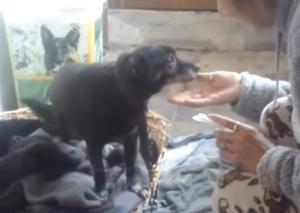 Χανιά: Σαρώνει το διαδίκτυο η ιστορία αγάπης ενός σκύλου με την ιδιοκτήτριά του [pic, vid]