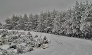 Θράκη: Πυκνό χιόνι σε περιοχές της Ροδόπης και του Έβρου – Μαγικές εικόνες στη φύση [pics]