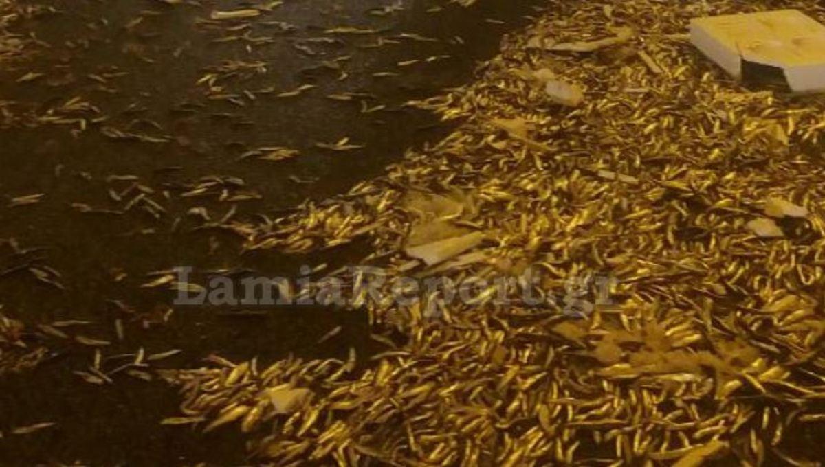 Τροχαίο στην εθνική οδό Αθηνών – Λαμίας: Η σήραγγα γέμισε γαύρο – Αυτοψία στο σημείο [pics]
