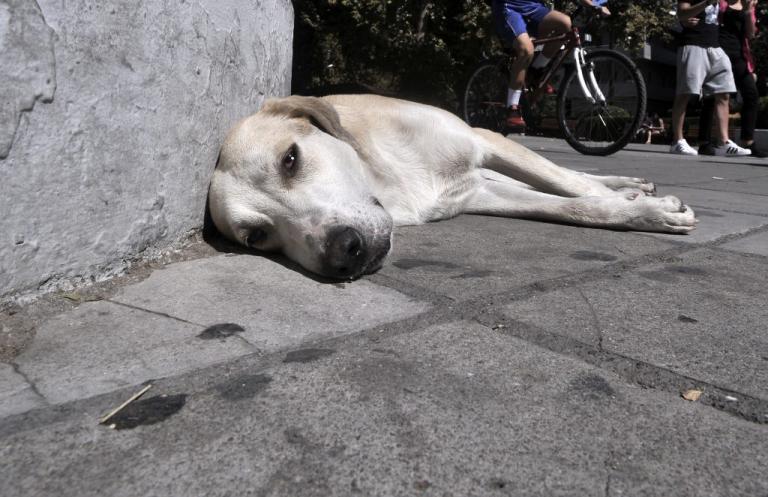 Καλαμάτα: Άκουσε την απόφαση για την κλωτσιά που έριξε στον σκύλο και έμεινε άφωνος!