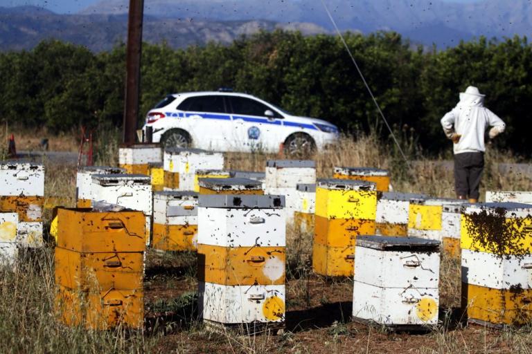 Ηράκλειο: Του έκλεψαν μέλισσες και κυψέλες! | Newsit.gr
