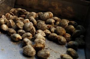 Λέσβος: Τα όστρακα για την Καθαρά Δευτέρα έκρυβαν την παρανομία – Έμπλεξαν ο ψαράς και ο έμπορος!