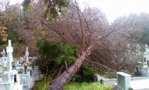 Ροδόπη: Έπεσε δέντρο στο νεκροταφείο [pics]