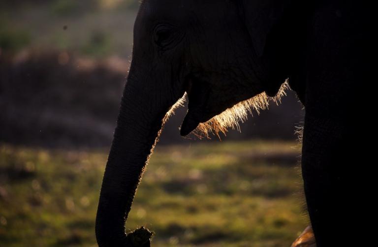 Ελέφαντες ποδοπάτησαν και σκότωσαν έναν άνδρα   Newsit.gr