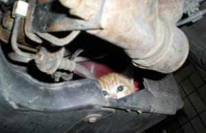 Ναύπλιο: Διάσωση γάτας που εγκλωβίστηκε σε ψυγείο καταστήματος – Την έσωσαν πυροσβέστες!