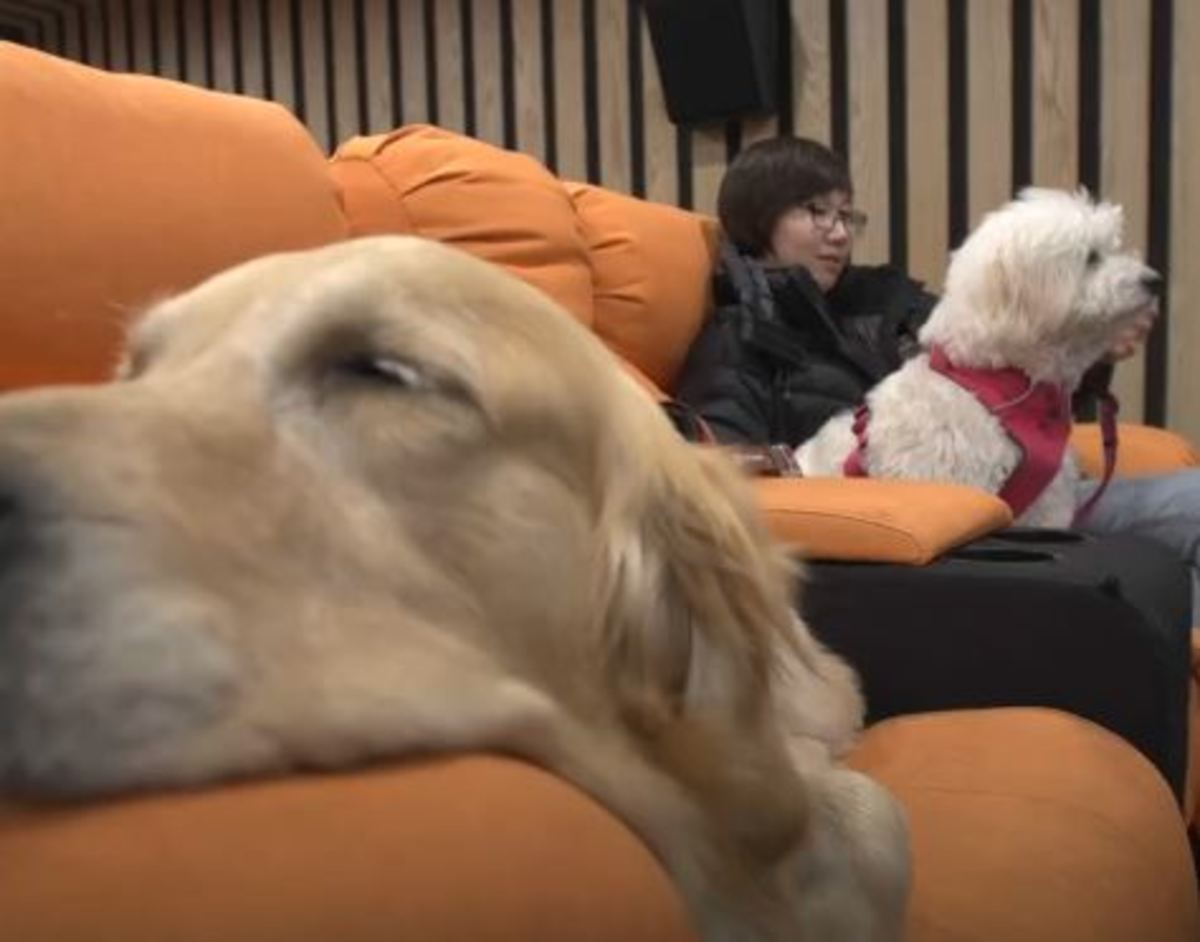 Τώρα μπορείτε να πάρετε τον σκύλο σας στο σινεμά | Newsit.gr