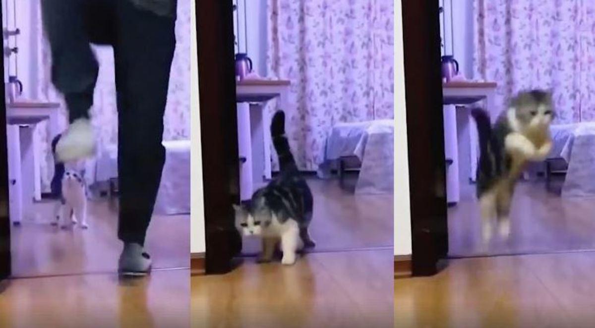 Το viral βίντεο με τις εκατομμύρια προβολές – Πώς ξεγέλασε μια γάτα | Newsit.gr