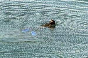 Κέρκυρα: Νεκρός βρέθηκε ο αγνοούμενος ψαράς