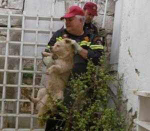 Ηράκλειο: Έσωσαν τη ζωή σε εγκλωβισμένο σκύλο – Χειροκροτήματα μετά την επέμβαση των πυροσβεστών [pics]