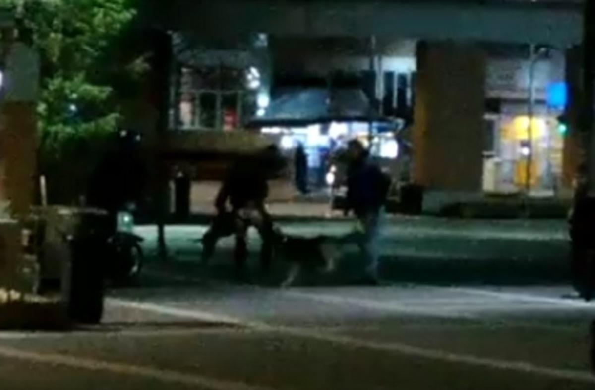 Ξάνθη: Επίθεση από αδέσποτα σκυλιά στην κάμερα – Εφιάλτης για νεαρό σε κεντρική πλατεία [vid] | Newsit.gr
