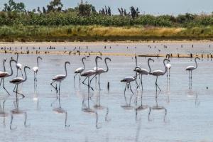 Κέρκυρα: Τα ροζ φλαμίνγκο επέστρεψαν στο νησί – Πανέμορφες εικόνες στη λιμνοθάλασσα της Λευκίμμης!
