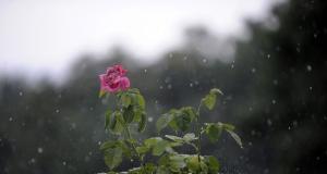 Καιρός… για ομπρέλα – Δείτε που θα βρέξει
