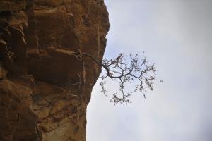 Αράχωβα: Θρίλερ με 30χρονο που έπεσε στον γκρεμό