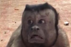 Μαϊμού με ανθρώπινο πρόσωπο γκρέμισε το ίντερνετ [vid]